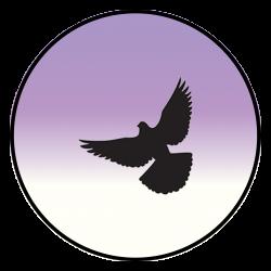 Circle Bird 5